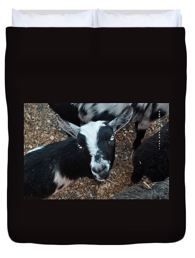 Goat Duvet Cover featuring the photograph The Goat With The Gorgeous Eyes by Verana Stark