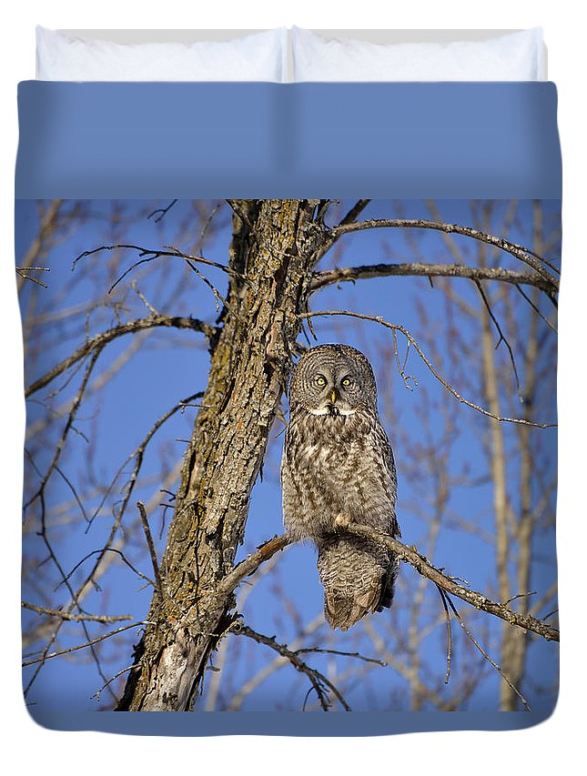 Great Grey Owl Duvet Cover featuring the photograph The Great Gray by Joshua McCullough