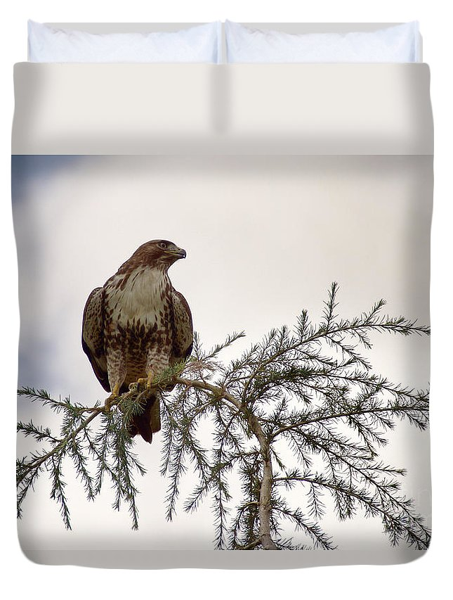 Bird Duvet Cover featuring the photograph The Hawk by Peggy Hughes