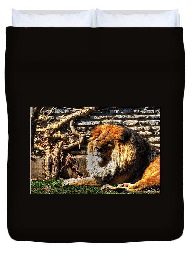 Lion Duvet Cover featuring the photograph The King Lazy Boy At The Buffalo Zoo by Michael Frank Jr