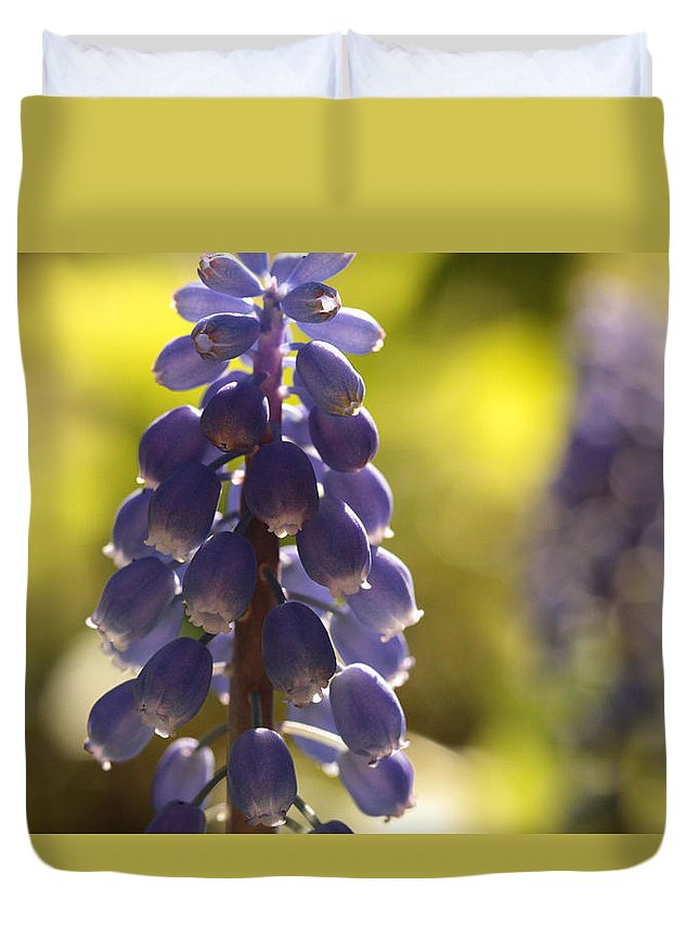 Grape Hyacinth Duvet Cover featuring the photograph The Lighter Fantastic by Connie Handscomb