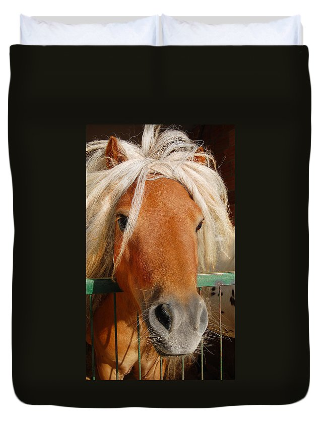 Pony Duvet Cover featuring the photograph The Little Pony by Gina Dsgn