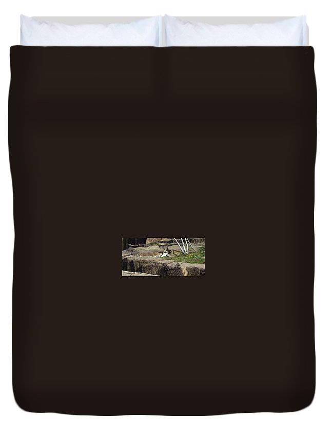 Tiger Duvet Cover featuring the photograph The Lounging Tiger 2 by Verana Stark