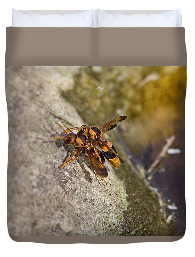 Orange Wasps Duvet Cover featuring the photograph The Mating Game V3 by Douglas Barnard