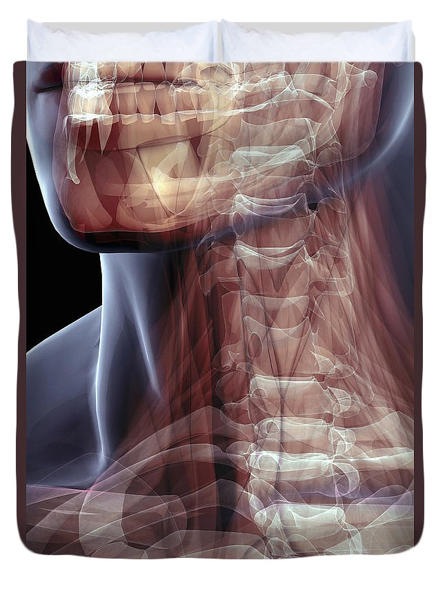 Transparent Duvet Cover featuring the photograph The Muscles Of The Neck by Science Picture Co