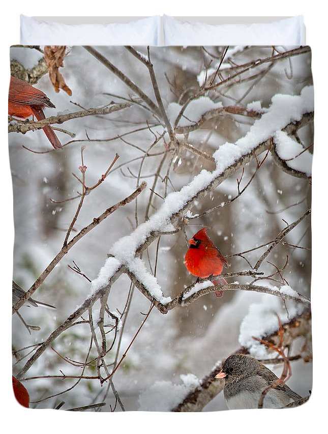 Red Duvet Cover featuring the photograph The Quiet Within The Forest by Betsy Knapp