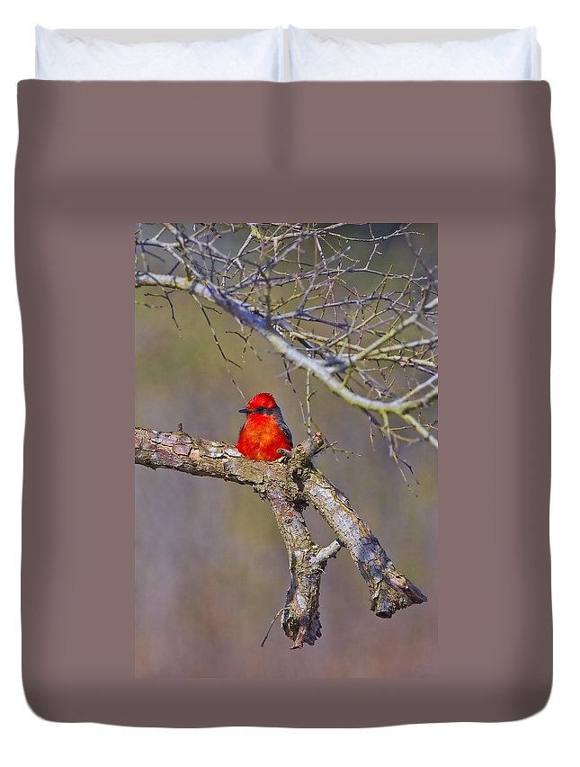 Vermilion Flycatcher Duvet Cover featuring the photograph The Scarlet Letter by Gary Holmes