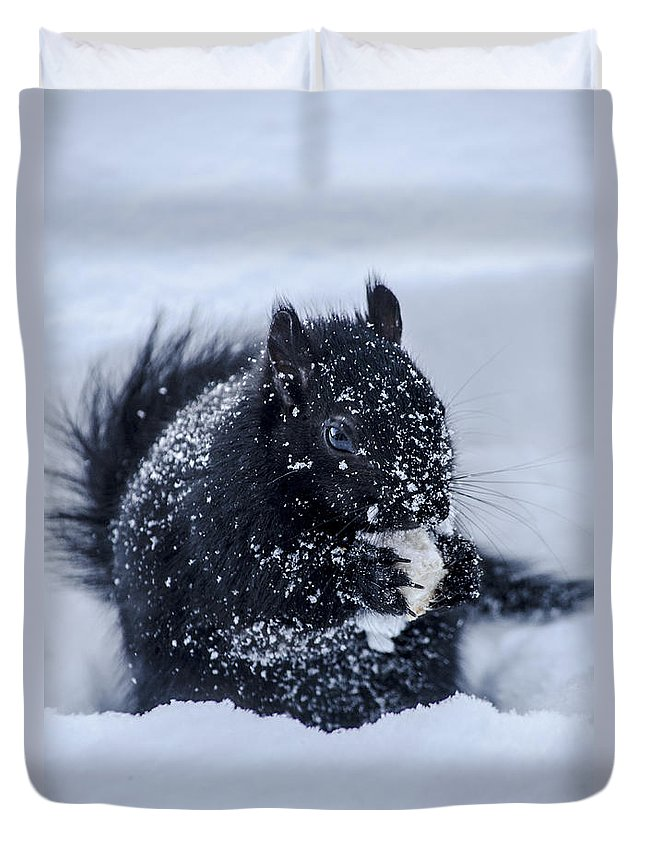 Squirrel Duvet Cover featuring the photograph The Sought After Prize by Urbanmoon Photography