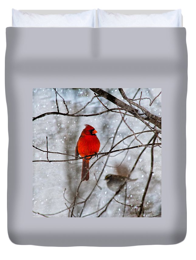 Red Duvet Cover featuring the photograph Blue Eyes In The Snow Cardinal by Betsy Knapp