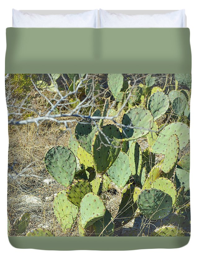 Cedar Park Duvet Cover featuring the photograph Cedar Park Texas Prickly Pear Cactus by JG Thompson