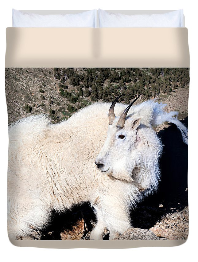 Mountain Goats Duvet Cover featuring the photograph The Wind On The Mountain by Jim Garrison