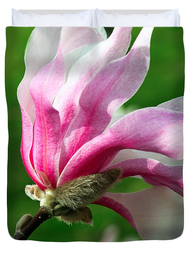 Magnolia Duvet Cover featuring the photograph The Windblown Pink Magnolia 1 - Flora - Tree - Spring - Garden by Andee Design