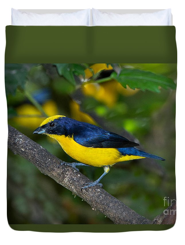 Thick-billed Euphonia Duvet Cover featuring the photograph Thick-billed Euphonia by Anthony Mercieca