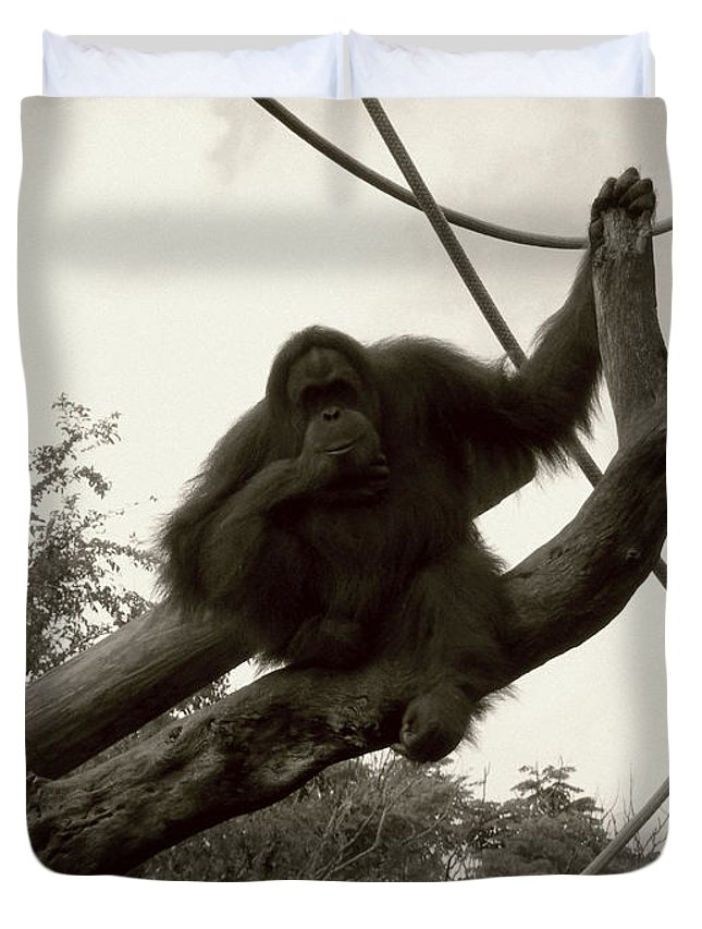 Orangutang Duvet Cover featuring the photograph Thinking Of You Sepia by Joseph Baril