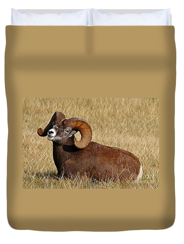 Wildlife Duvet Cover featuring the photograph This Is My Space by Vivian Christopher