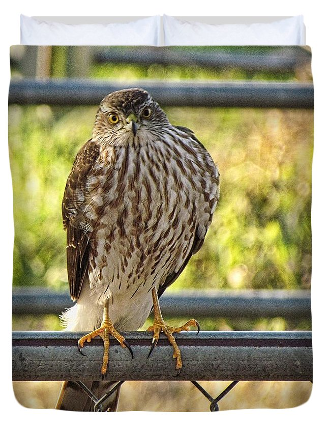 Cooper's Hawk Duvet Cover featuring the photograph Those Claws That Stare by Shannon Story