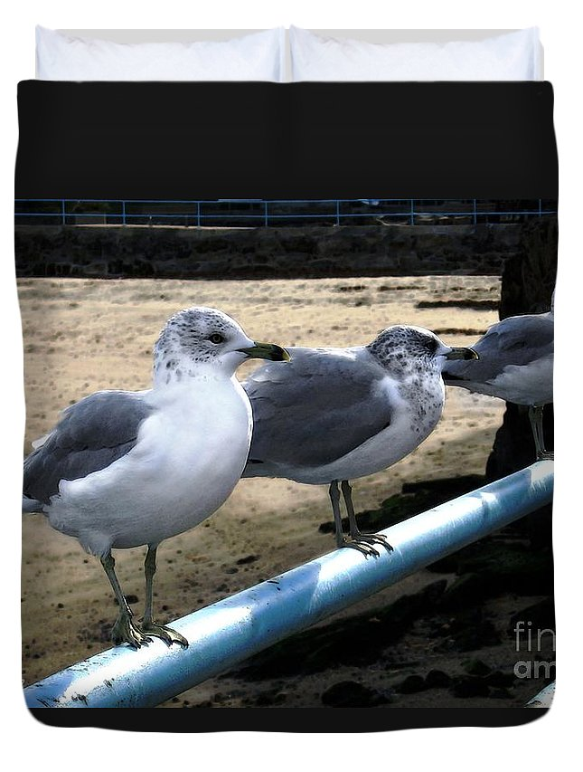 Seabirds Duvet Cover featuring the digital art Three Amigos by Dale  Ford