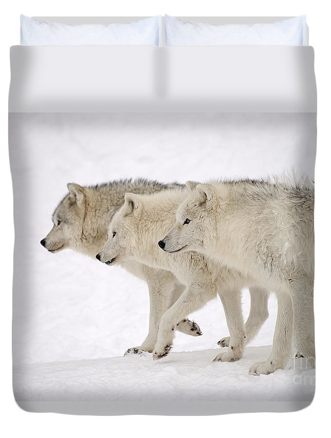 Arctic Wolves Duvet Cover featuring the photograph Three Amigos by Joshua McCullough