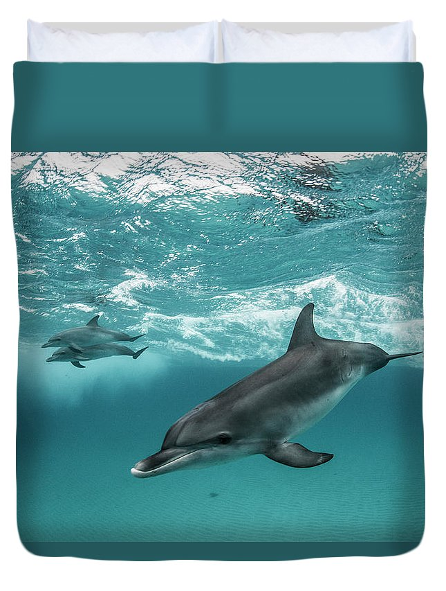 Tranquility Duvet Cover featuring the photograph Three Atlantic Spotted Dolphins by Rodrigo Friscione