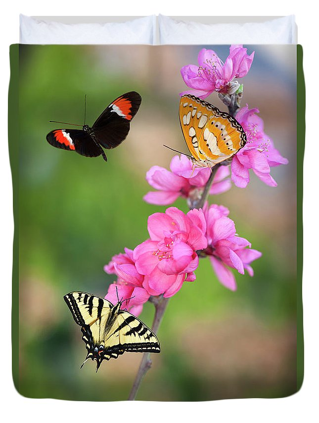 Natural Pattern Duvet Cover featuring the photograph Three Butterflies On Cherry Blossoms by Susangaryphotography