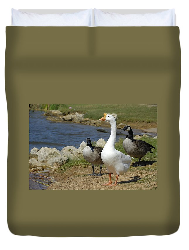 Geese Duvet Cover featuring the photograph Three Geese Just Srolling Along by Charles Beeler