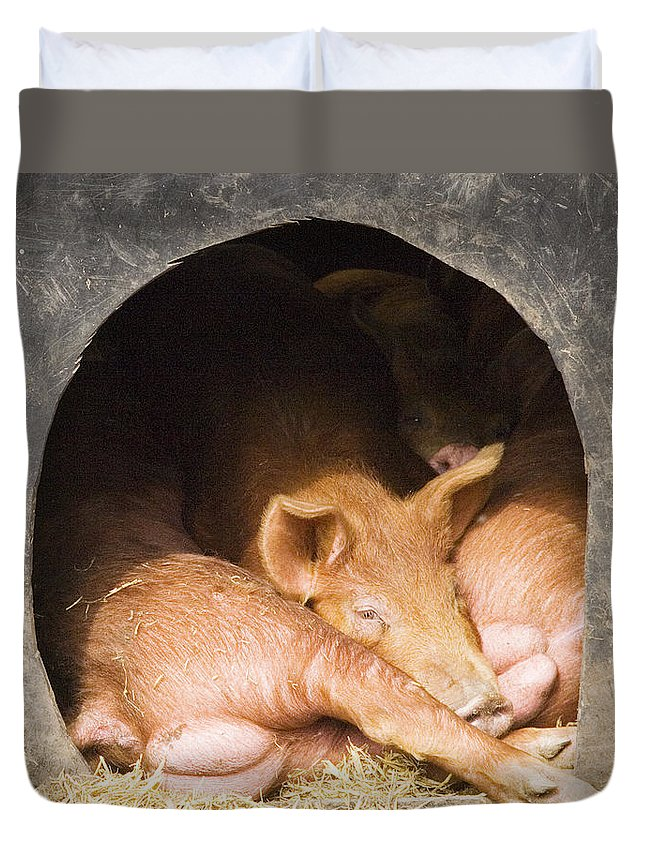 Pig Duvet Cover featuring the photograph Three Little Pigs by Rachel Down