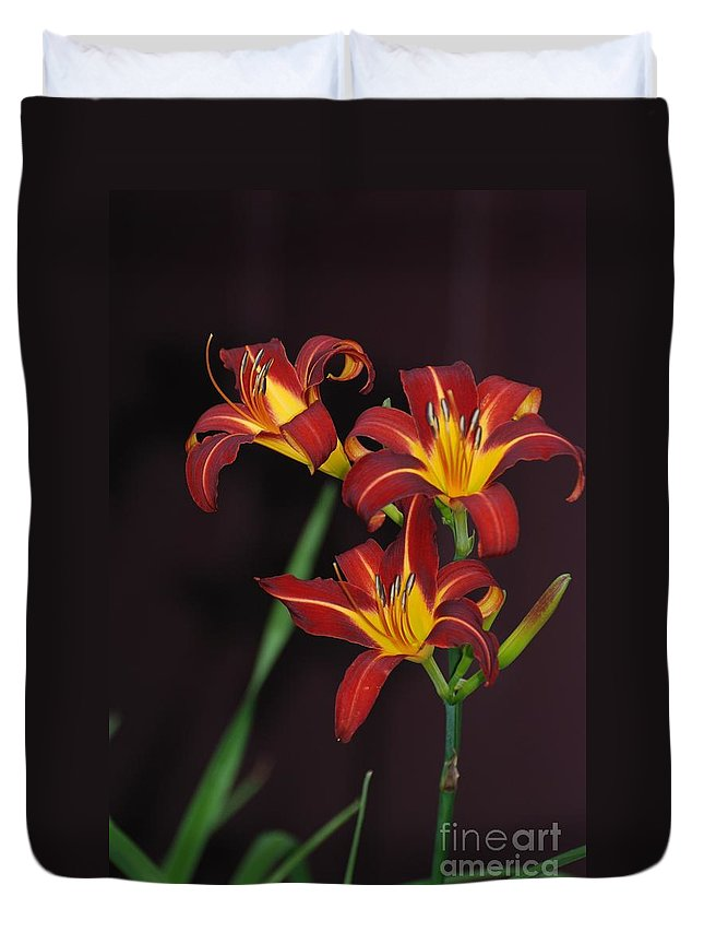 Lilies Duvet Cover featuring the photograph Three Red Daylilies by Amy Porter