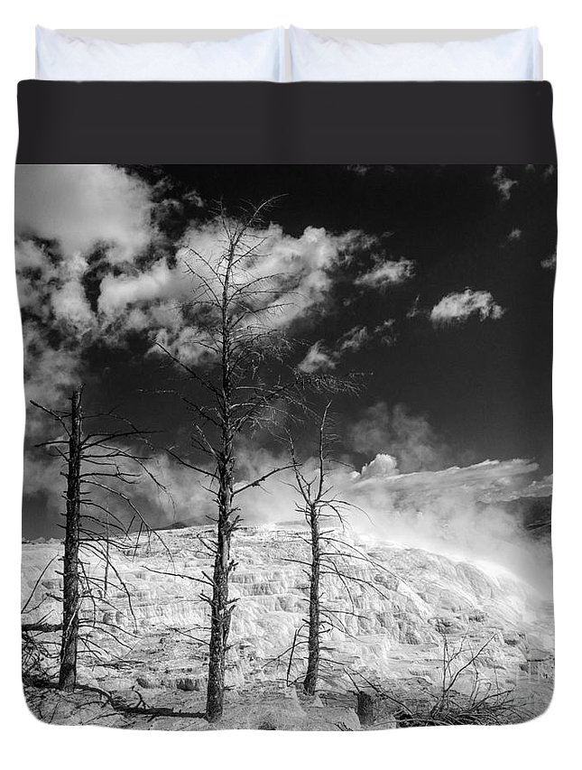 Monotone Duvet Cover featuring the photograph Three Trees by Claudia Kuhn