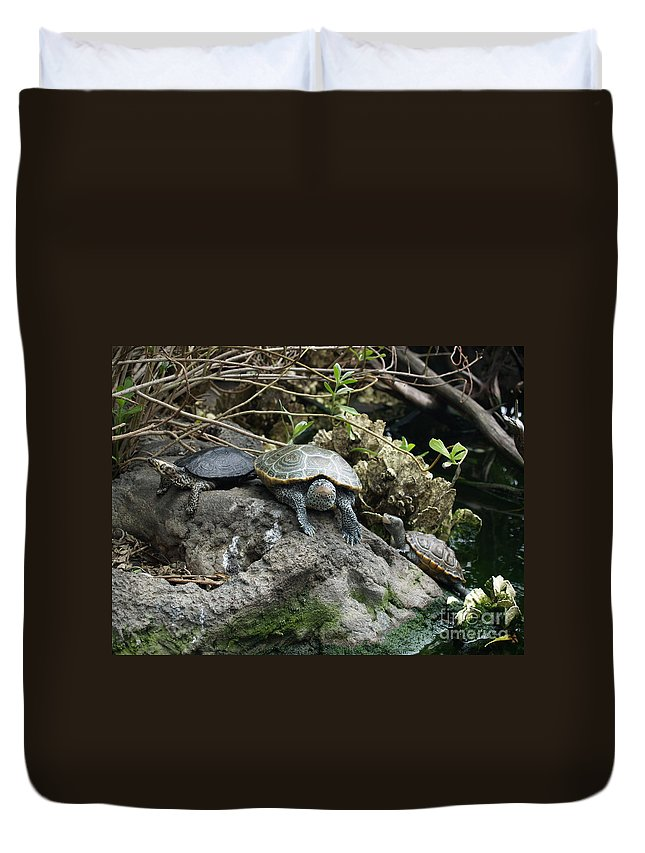 Turtles Duvet Cover featuring the photograph Three Turtles by Robin Maria Pedrero