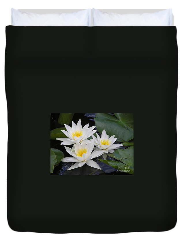 Waterlily Duvet Cover featuring the photograph Three White Waterlilies by Kerstin Ivarsson
