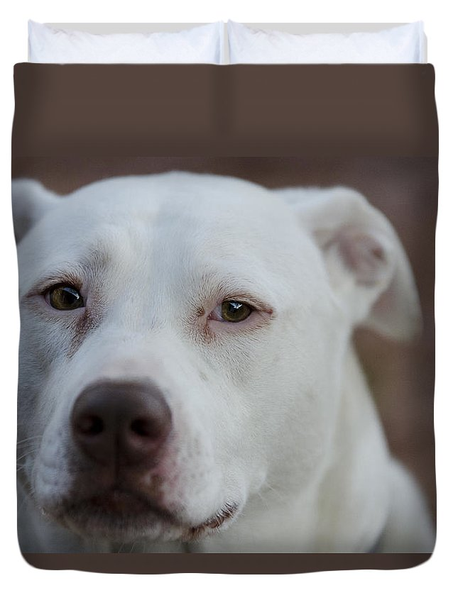 Pitbull Terrier Duvet Cover featuring the photograph Through The Eyes Of A Pitbull II by Saija Lehtonen