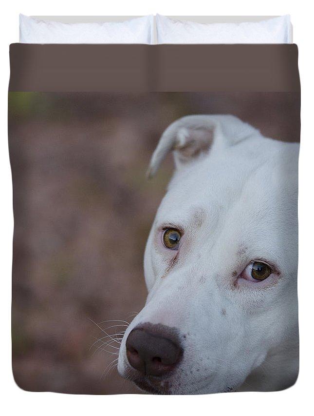 Pitbull Terrier Duvet Cover featuring the photograph Through The Eyes Of A Pitbull by Saija Lehtonen