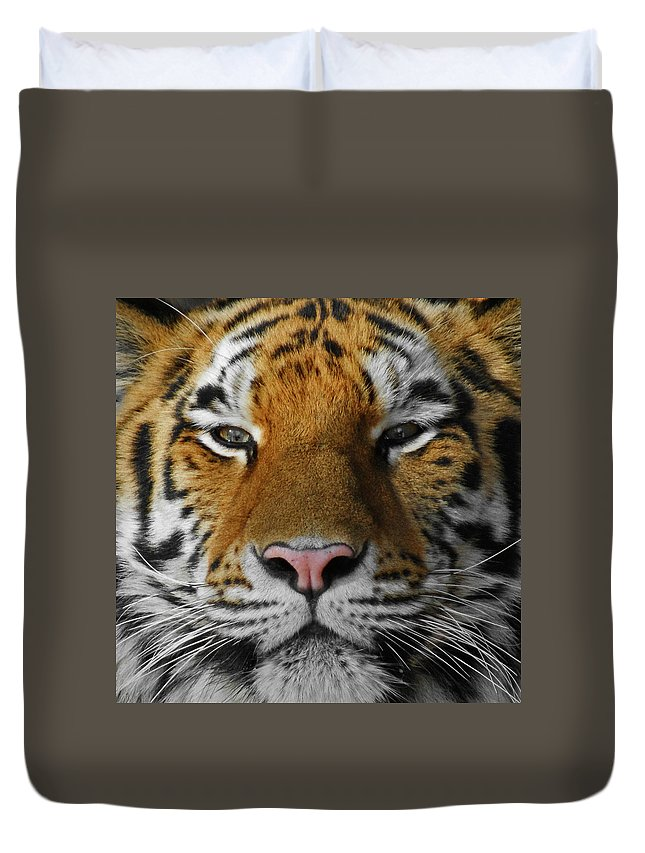 Tiger Duvet Cover featuring the photograph Tiger 1 by Ernie Echols