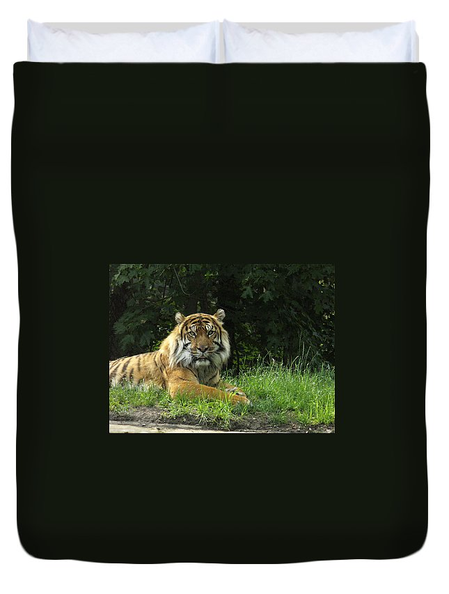 Siberian Tiger Duvet Cover featuring the photograph Tiger At Rest by Lingfai Leung