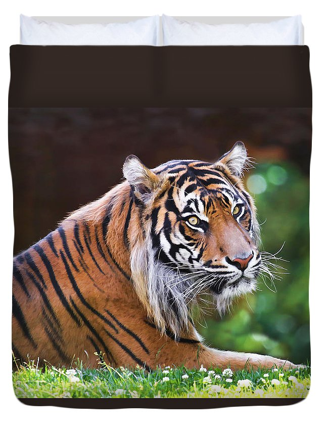 Tiger Duvet Cover featuring the photograph Tiger In The Sun Painting by Athena Mckinzie
