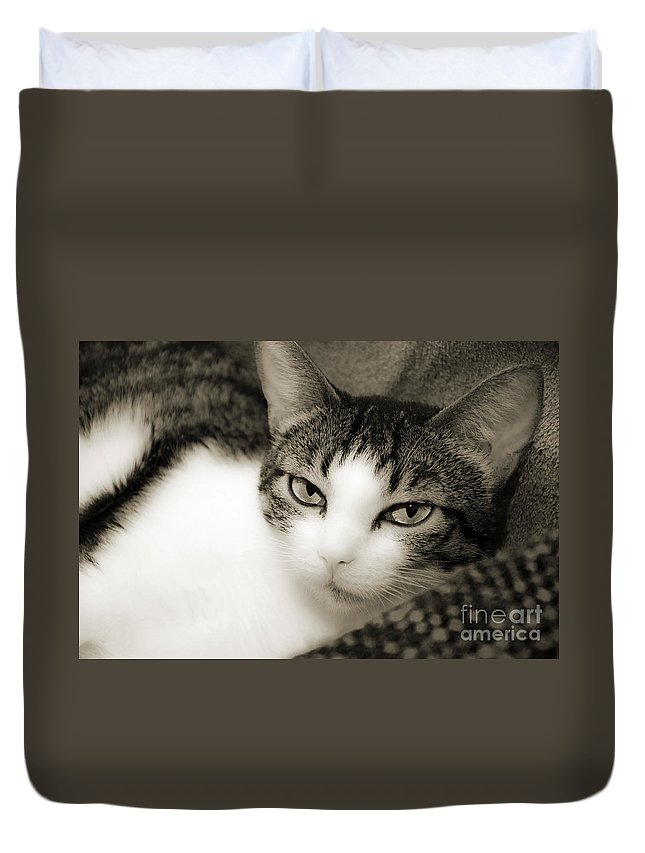 Cat Duvet Cover featuring the photograph Tilly Little Miss Attitude by Andee Design