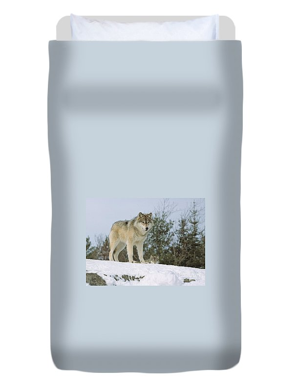 Timber Duvet Cover featuring the photograph Timber Wolf by Les Palenik