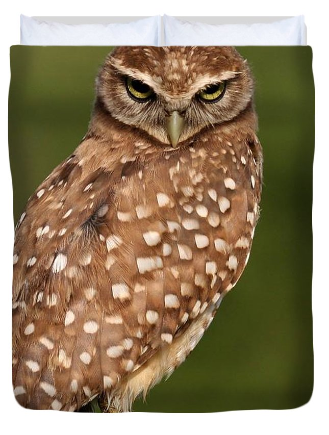 Owl Duvet Cover featuring the photograph Tiny Burrowing Owl by Sabrina L Ryan