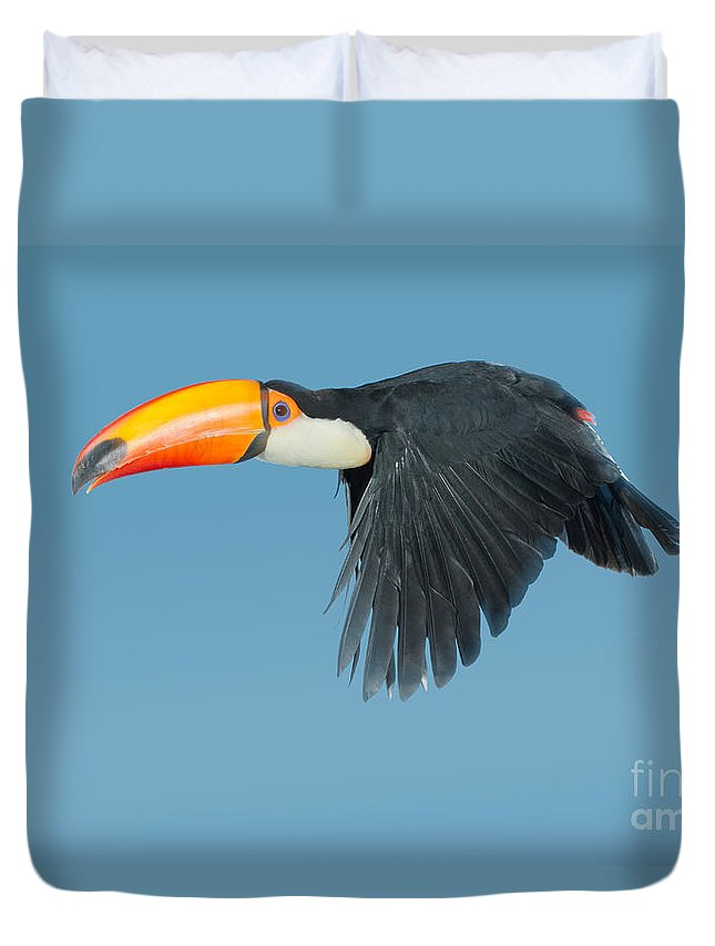 Animal Duvet Cover featuring the photograph Toco Toucan In Flight by Anthony Mercieca