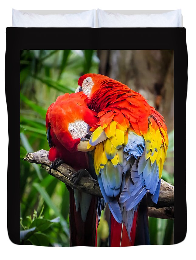 Ara Duvet Cover featuring the photograph Together by Zina Stromberg