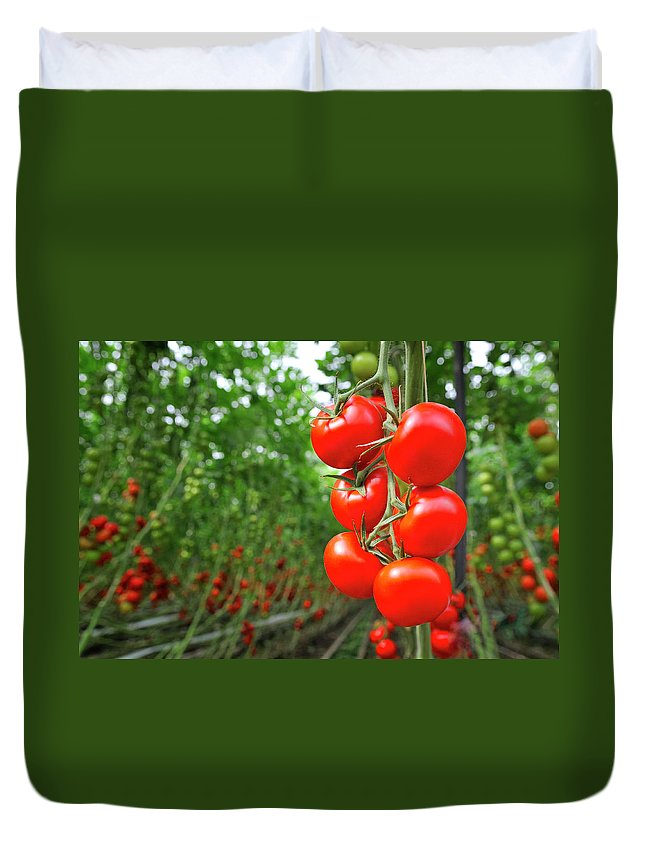 Agricultural Building Duvet Cover featuring the photograph Tomato Greenhouse by Sjo