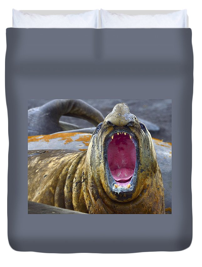 Southern Elephant Seal Duvet Cover featuring the photograph Tonsils And Trunks by Tony Beck