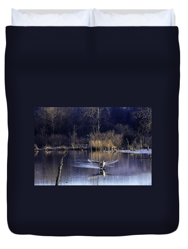 Trumpeter Swan Duvet Cover featuring the photograph Touchdown Trumpeter Swan by Michael Dougherty