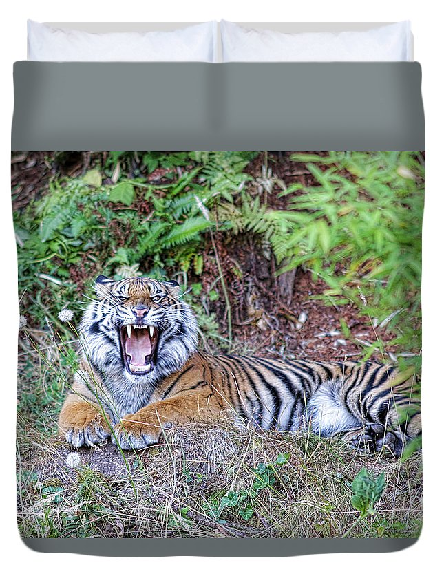 Tiger Duvet Cover featuring the photograph Tread Lightly by Steve McKinzie