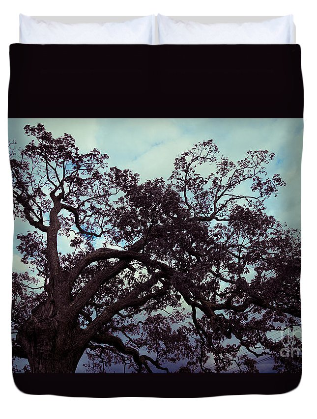 Branches Duvet Cover featuring the photograph Tree Against Sky by Amy Cicconi