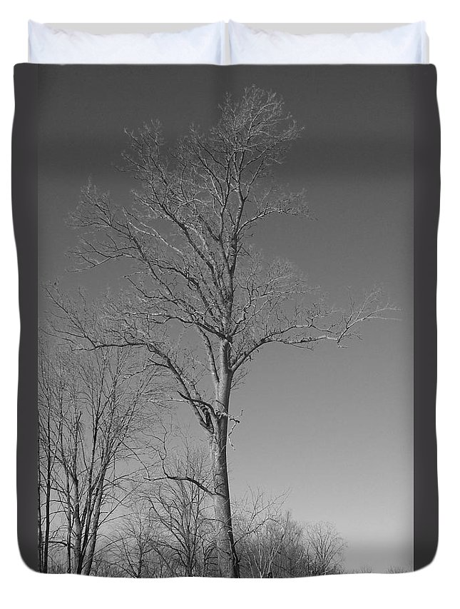 Tree Duvet Cover featuring the photograph Tree In Winter by Michelle Miron-Rebbe