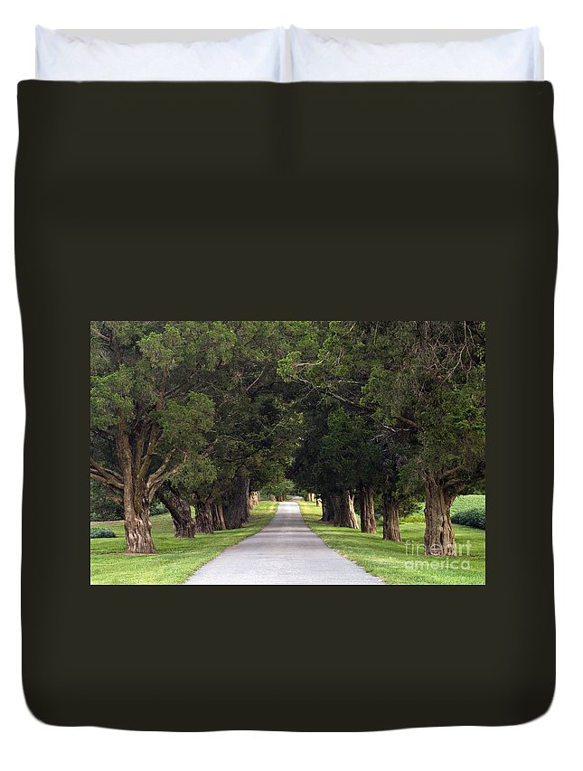Old Duvet Cover featuring the photograph Tree Lined Drive - D008564 by Daniel Dempster