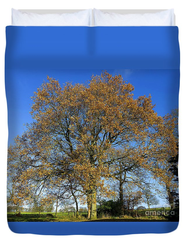 Tree Duvet Cover featuring the photograph Tree Of Life by Gillian Singleton