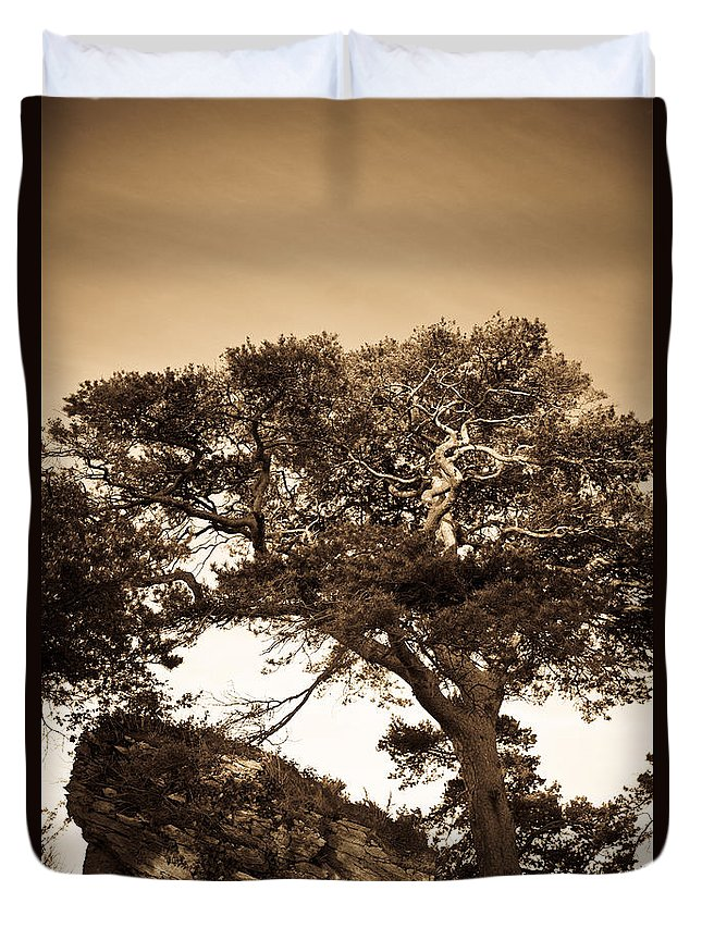 Tree Duvet Cover featuring the photograph Tree Of Life In Sepia by Douglas Barnett