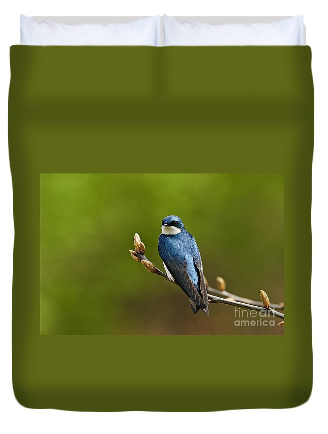Tree Swallow Duvet Cover featuring the photograph Tree Swallow Pictures 27 by World Wildlife Photography